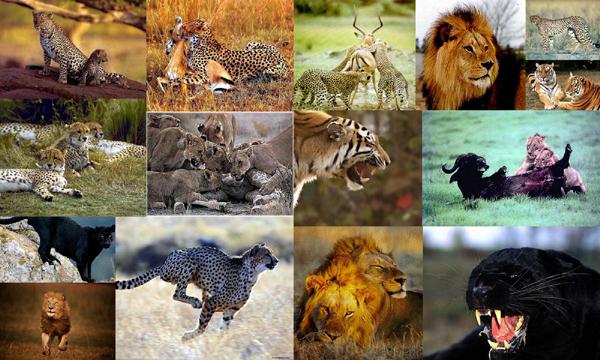 kattedyr arter